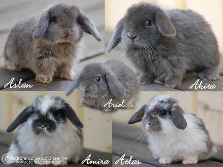 Intervju med Sofia Genne, kaninuppfödare | Kanin iFokus